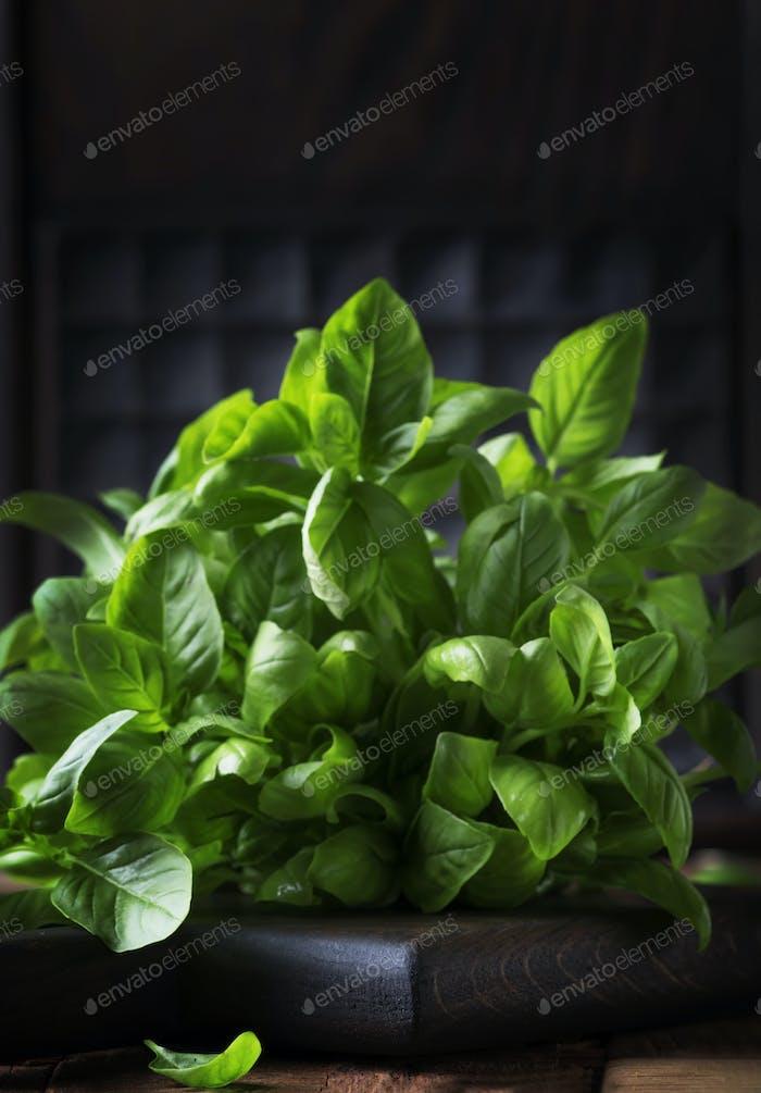 Frisches grünes Basilikum, Gewürzkraut, selektiver Fokus