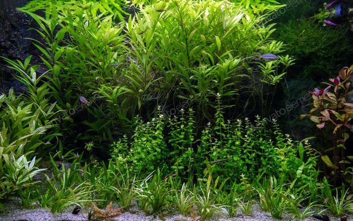 Freshwater aquarium with tropical fish and water plants
