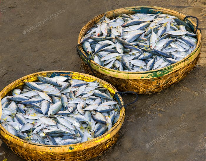 Baskets of Fish