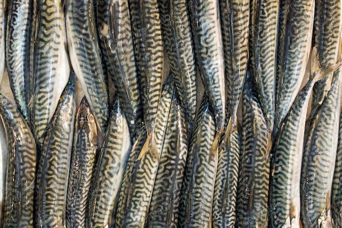 Fish on a market