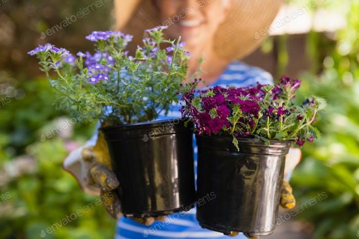 Mittelteil der Senior Frau hält Blumentöpfe