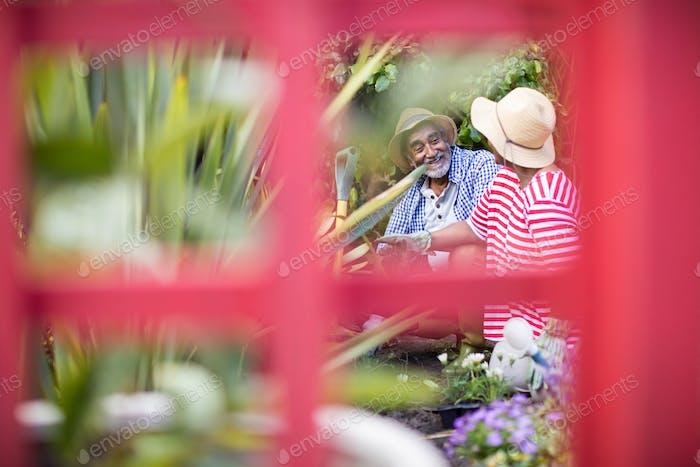 Smiling couple gardening seen through metallic structure
