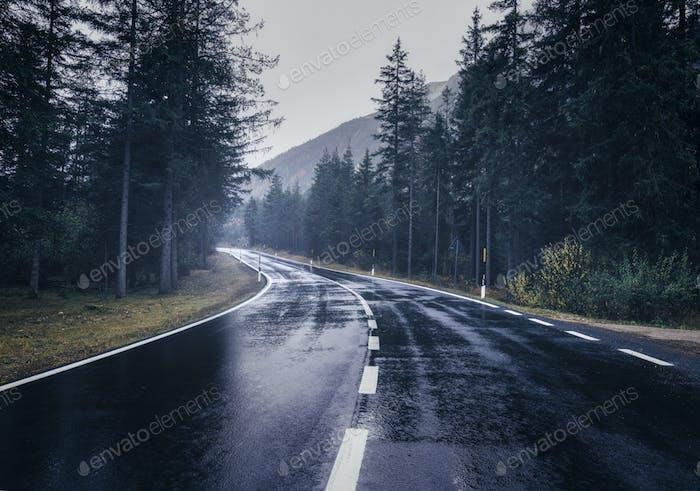 Straße im Sommer nebligen Wald im Regen. Landschaft