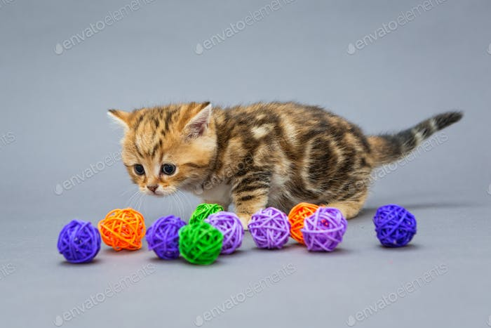 Little kitten  plays with balls