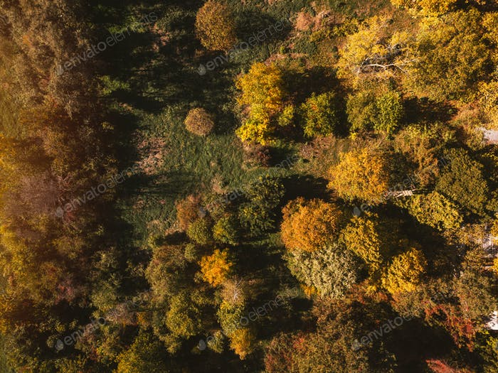Aerial view of autumn park