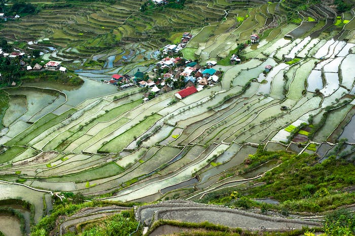 Rice terraces and village houses. Banaue, Philippines
