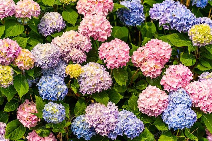 Bündel von bunten Blumen