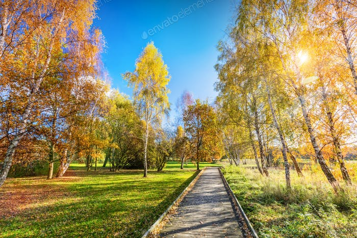 Autumn park with colorful trees, falling leaves on a sunny day.
