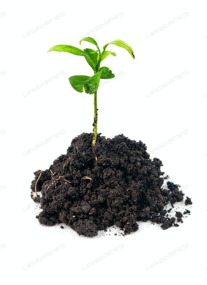 plant in soil