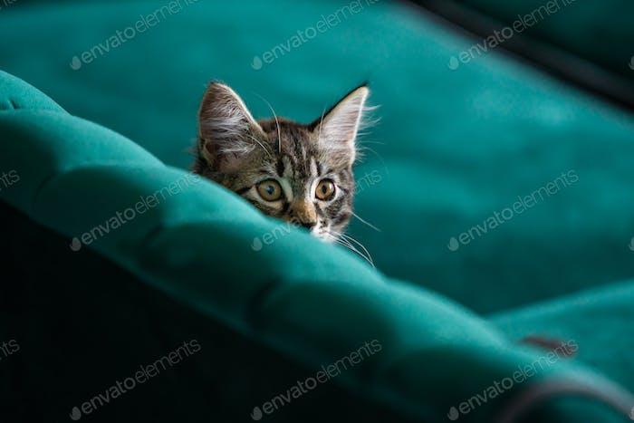 Kätzchen ist sehr schön. graue Kätzchen