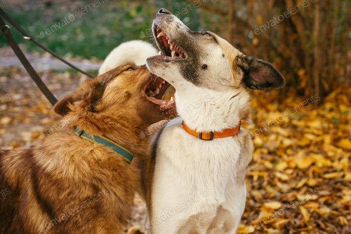 Two cute friends dogs playing together and biting in autumn park
