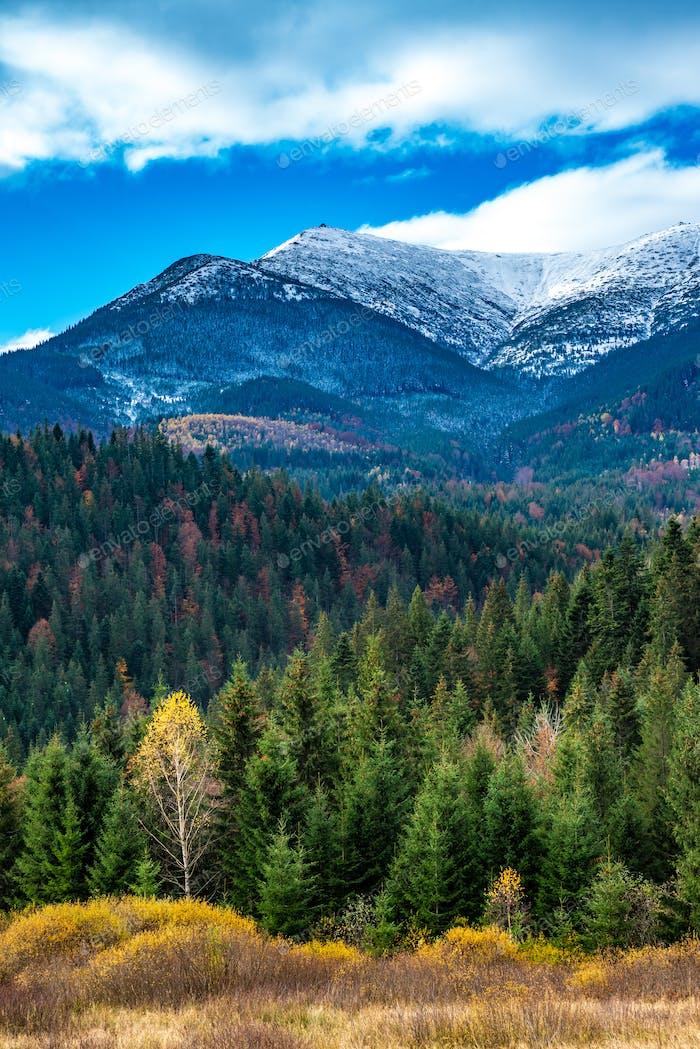 Mehrfarbiger Wald im schönen warmen Herbst