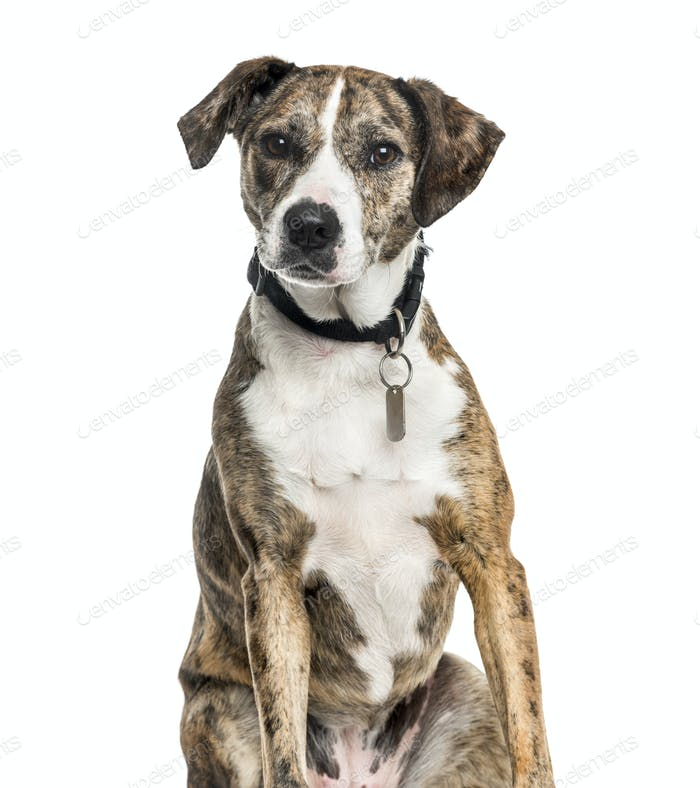 Mixed-breed dog sitting, cut out