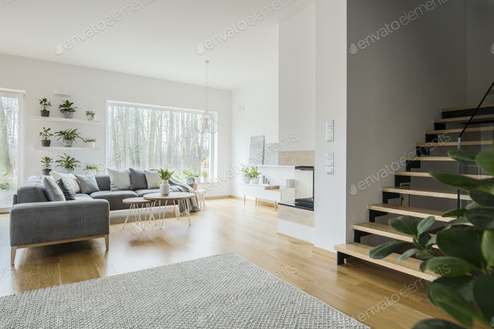 White living room interior with grey corner couch, fresh green p