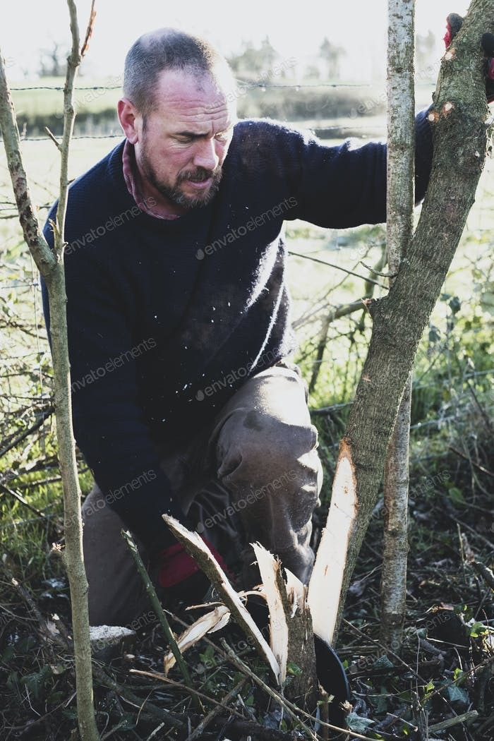 Bearded man kneeling next to wooden stake, building a traditional hedge.