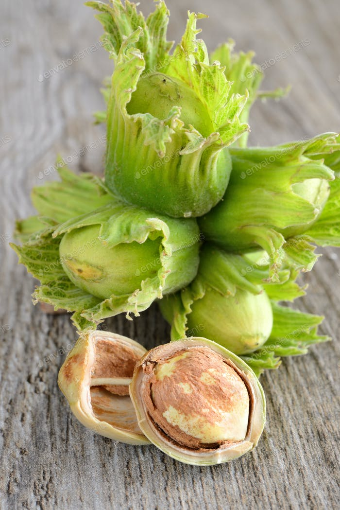 Thumbnail for fresh hazelnuts