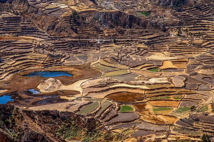 Terrassenfelder im Canyon Colca