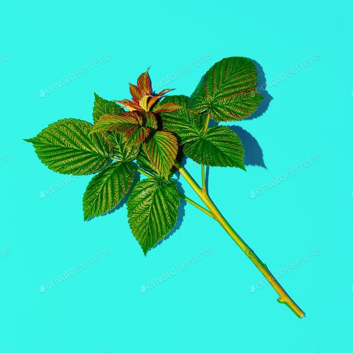 Sprig of Raspberry. Herbalife style. Minimal