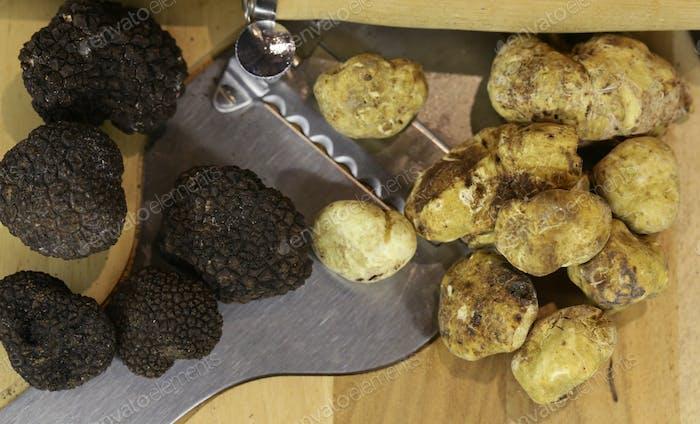 Black and White Truffle Mushroom