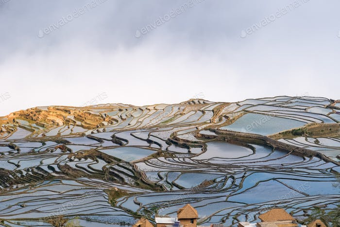 terraced field closeup on valley