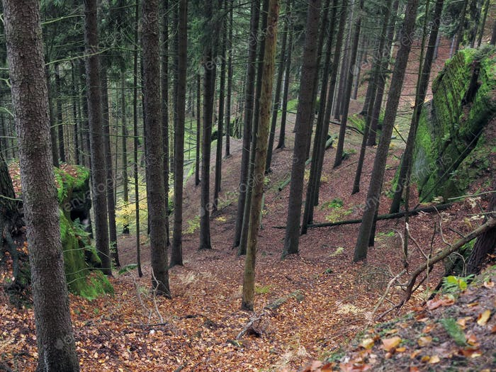 Deep ravine in the forest