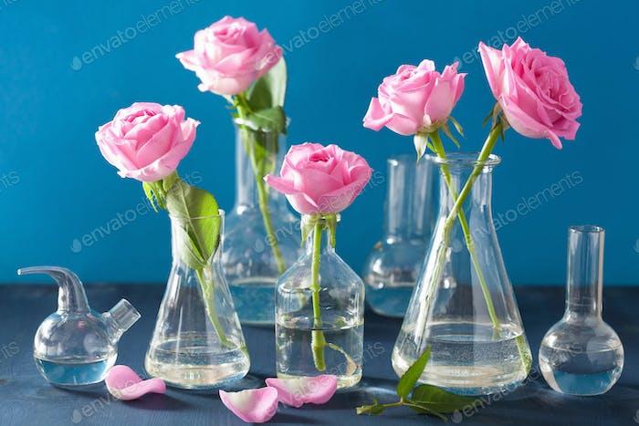 rosa Rosenblüten in Chemiekolben über blau