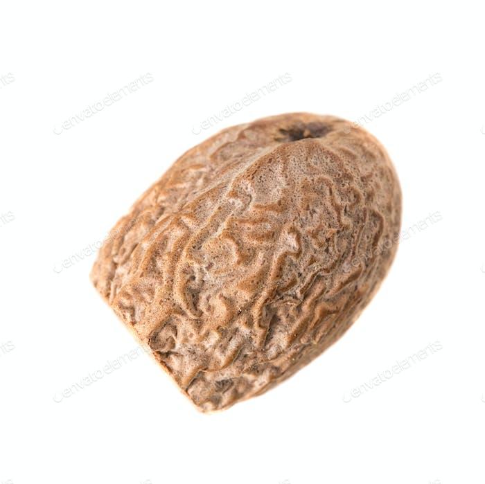 Close-up of Nutmeg.