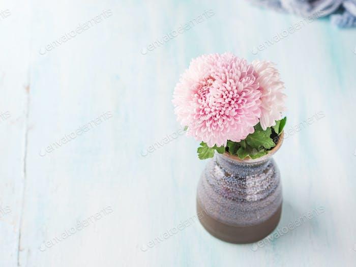 Rosa Chrysantheme in einer Vase auf Pastellfarbe