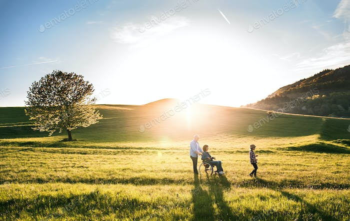 A small girl with her senior grandparents with wheelchair on a walk outside in sunset nature.