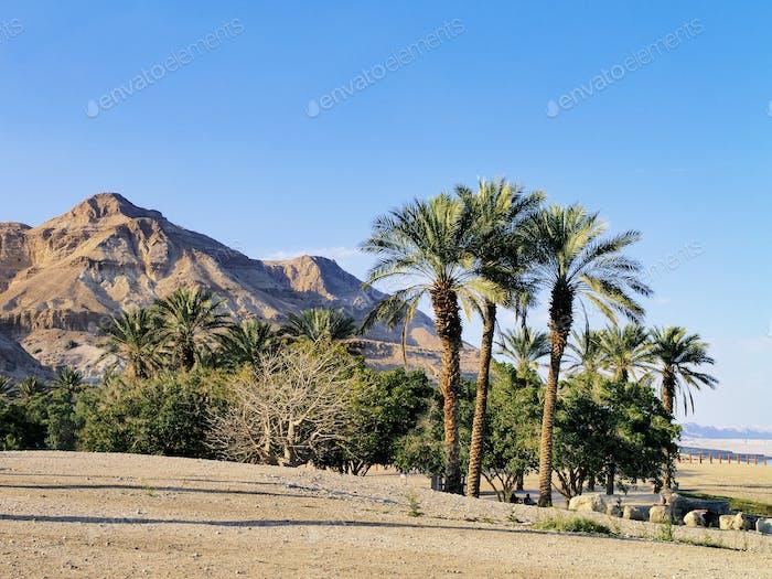 Palms in Israel