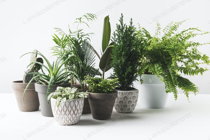 various beautiful green plants in pots on white