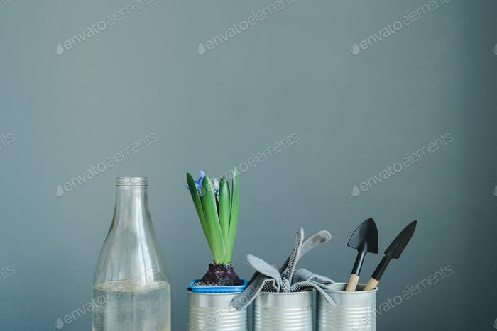 hyacinth mix plant, gloves and gardening tools in metal pot and glass bottle