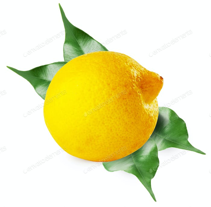 Ripe sour lemon with leaves