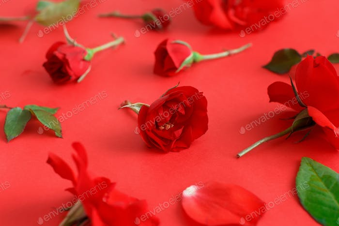 Red Rose flowers on a red background