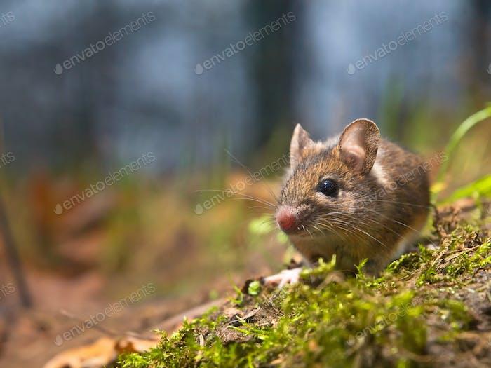 Maus mit viel Kopierraum