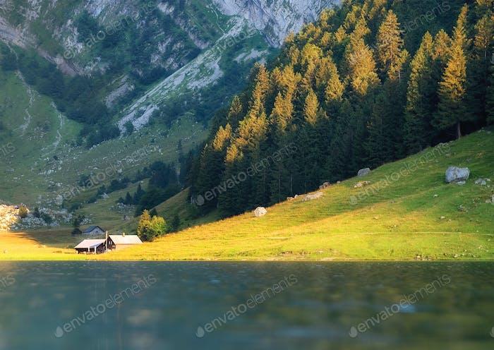 Ein Wald und ein See mit Reflexionen. Sommerlandschaft in der Schweiz