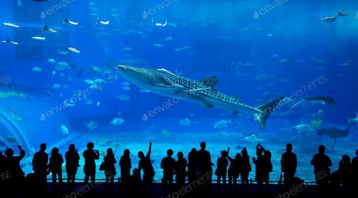 Aquarium in Japan