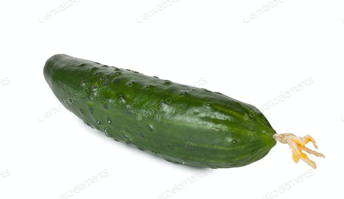 Green ripe juicy cucumber