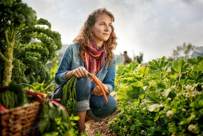 Freundliche Frau, die frisches Gemüse vom Dachgewächshaus Garten erntet