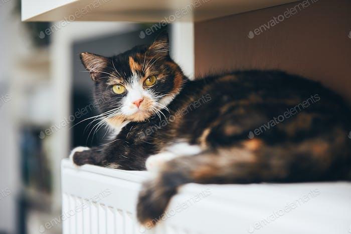 Niedliche Katze ist entspannig zu Hause