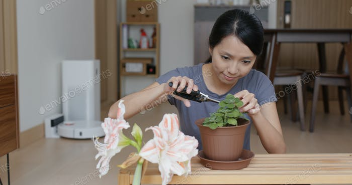 Woman flower planting at home