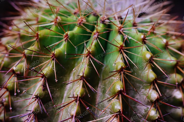Close-up of botanical Barrel rounded cactus detailed texture.
