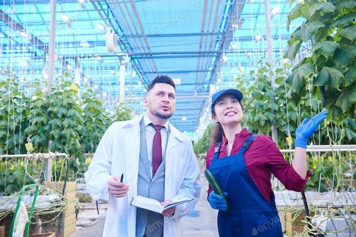 Scientist Examining Plantation in Greenhouse