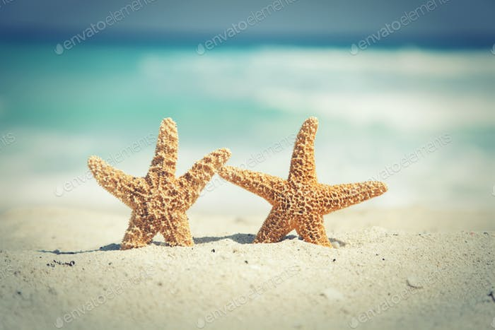 Two Starfish Standing Together on a Tropical Beach