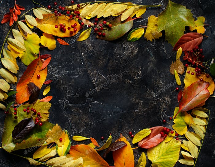 Autumn  leaves and berries on a dark background