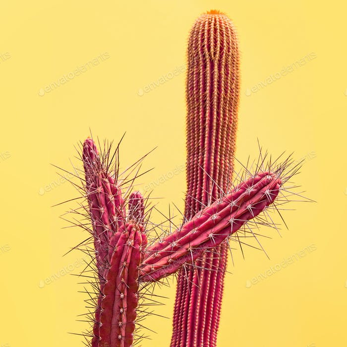 Cactus. Art Gallery Fashion Design. Minimal