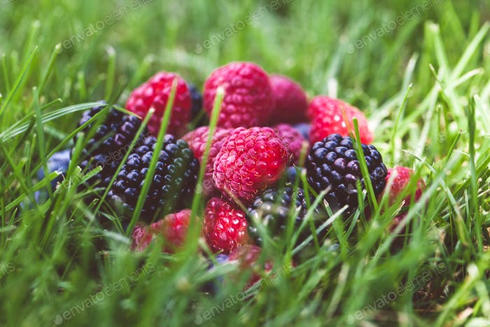 Summer berry fruits in green grass background