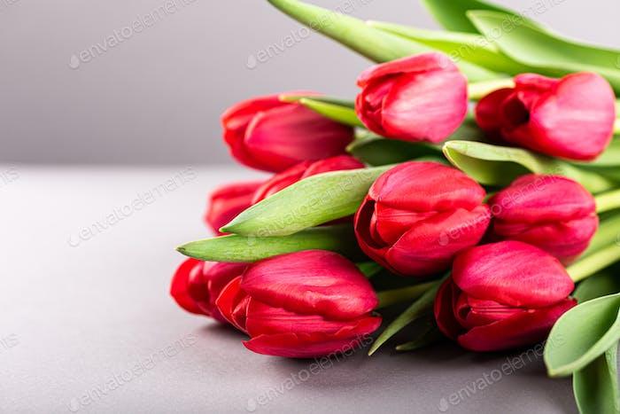 Rosa Tulpen auf grauem Hintergrund