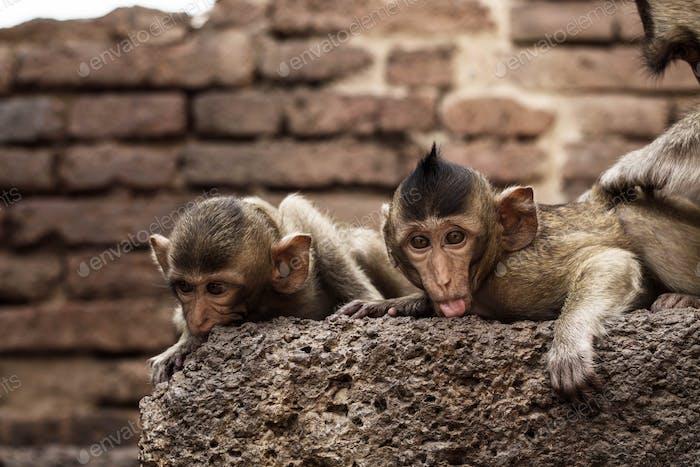 Monkey is playing on brick