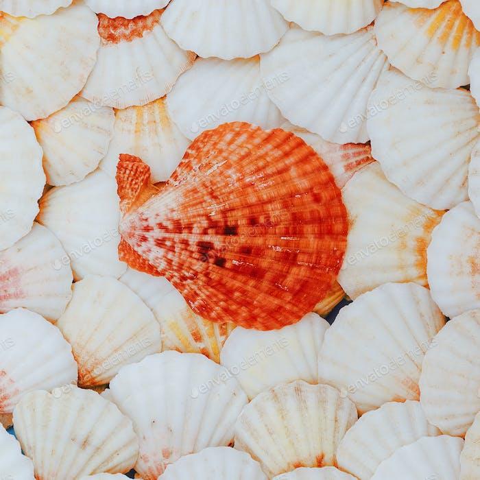 Shells background Vacation mood. Minimal art
